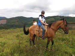 Haras Encanto Horse