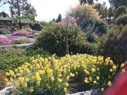 Yarrabee Native Garden