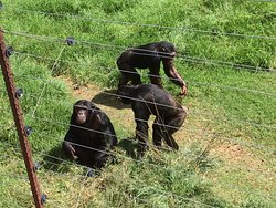 Jane Goodall Chimpanzee Eden Sanctuary