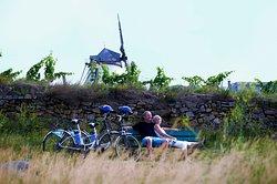 Mit dem E-Bike ganz entspannt zum Wahrzeichen der Weinstadt Retz - der Windmühle radeln