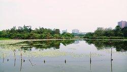 Zhouzi Wetland Park