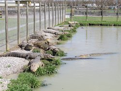 Greenwood Gator Farm and Tours