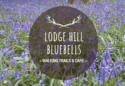 Lodge Hill Bluebells