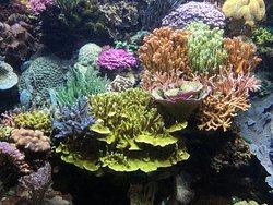Aquarium du Cap d'Agde