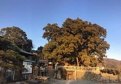 Hoshoin no Shimpaku