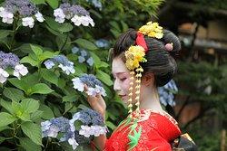 Kimono & Geisha Experience COCOMO