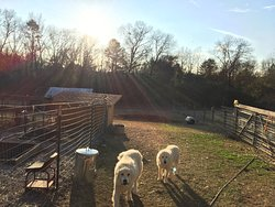 Corriedale Farm