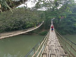 ‪Bamboo Hanging Bridge‬