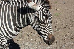 Zoodoo野生动物园