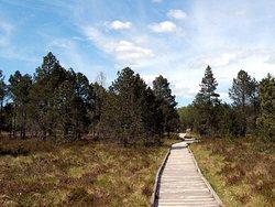 Reserve Naturelle des Tourbieres