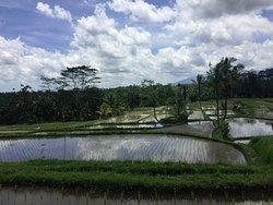 Hai Bali Cycling Tour