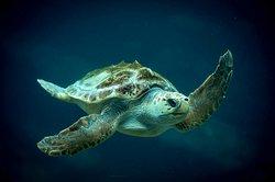 uShaka Sea World Aquarium