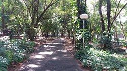 Bosque da Comunidade