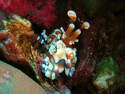 Sea Bees Diving - Chalong