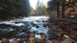 River Spruce