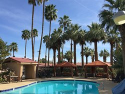 Palm tree oasis