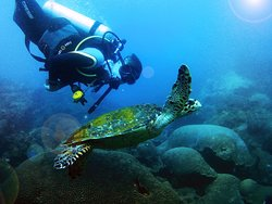Santa Marta Dive and Adventure
