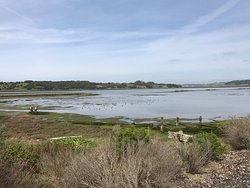 Elkhorn Slough National Estuarine Research Reserve
