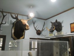 Historical - Folklore and Natural History Museum of Kozani
