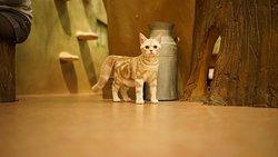 Cat Cafe Temari no Ouchi
