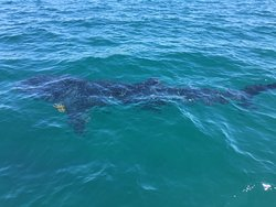 Whale Shark Boat Tours
