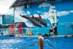 Анапский дельфинарий на Пионерском проспекте 20А