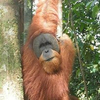 Sumatra Jungle Tours