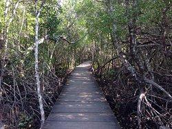 Karimunjawa Mangrove Forest