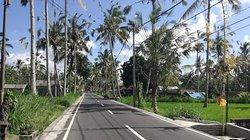 Bali (247026580)