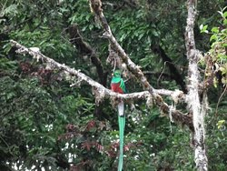 Parque National Los Quetzales