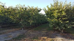 Orchard area, harvest season is over for some fruit type