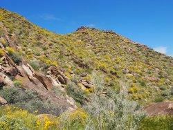 Oswit Canyon