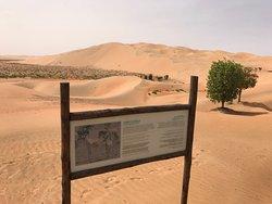 Desert oasis mirage