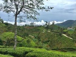 """""""Heritance"""" inmitten der Teeplantagen"""