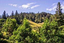Norfolk Island National Park & Botanic Garden