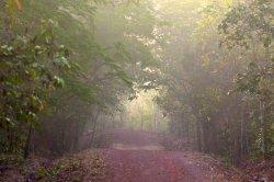 Chandaka-Dampada Wildlife Sanctuary