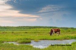 Akrotiri Marsh