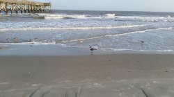 Sullivan's Island Beach