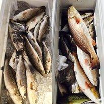 St. Bernard Fishing Charters