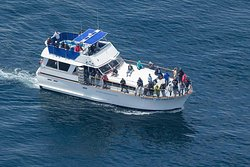 Blue Ocean Whale Watch