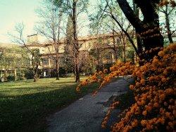 Parco Ragazzi del Brunetta