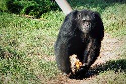 Fundacio Mona, Primate Sanctuary