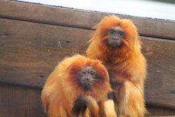 Capron Park Zoo