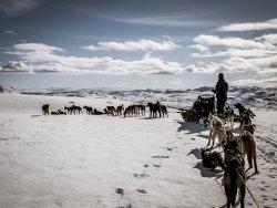 Vidda Runners Huskies