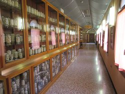 Esapolis - Museo Vivente degli insetti