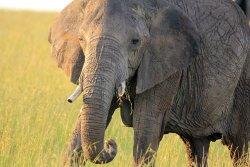 Masai Mara Eco System