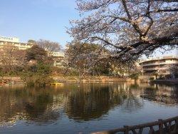 Mitsugi Park