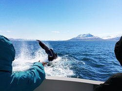 Ambassador Whale Watching-Day Tours