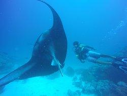 Rasdhoo Dive Club