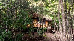 Selva Madre Ayahuasca Retreat